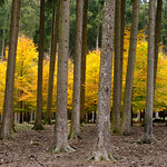 Autumn Forrest thumbnail