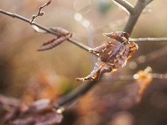 Nature Bokeh - 1. Januar 2019 - Tarbek - Schleswig-Holstein - Germany (torstenbehrens) Tags: nature bokeh olympus penf m45mm f18 1 januar 2019 tarbek schleswigholstein germany