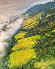DJI_0054-Pano_25 (Ngô Huy Hòa (hachi8)) Tags: hồngthái ruộngbậcthang nahang tuyênquang