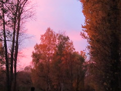 pink clouds in the moment of sunset (VERUSHKA4) Tags: sunset cloud ciel trunk autumn color colour colourful nature evening october canon europe season beautiful head russia city moscow vue ville view pink blue yellow branch bough birchtree orange leaf leaves astoundingimage