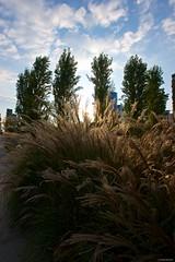 IMGP3706 Trees and grass (Claudio e Lucia Images around the world) Tags: labibliotecadeglialberi portanuova milano melchiorregioia newmilano growingtown reflections sky lights pentax pentaxk3ii pentaxart sigma sigmaart sigma1020 bluesky blu blusky