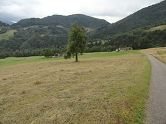 Conca di Pani, Carnia, Friuli (travelourplanet.com) Tags: carnia concadipani pani friuli friuliveneziagiulia alpeggio montagne boschi colgentile raveo enemonzo prati