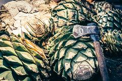 Las piñas de agave (julien.ginefri) Tags: mexique méxico agave america latinamerica maguey mexico mezcal oaxaca
