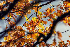 Autumn | Essen | Germany (*Photofreaks*) Tags: morning tree autumn outdoor season tranquil wallpaper background countryside peace leaves essen nrw nordrheinwestfalen northrhinewestphalia germany deutschland ruhr ruhrgebiet adengs wwwphotofreakseu fall herbst leaf foliage