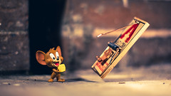 Gotta Be Quick (3rd-Rate Photography) Tags: tomandjerry jerry jerrymouse mouse hannabarbera victor mousetrap metalpedalmousetrap snaptrap cheese funko mysteryminis cartoon toy toyphotography canon 50mm 5dmarkiii jacksonville florida 3rdratephotography earlware 365