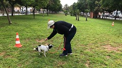 IMG_8530 (Doggy Puppins) Tags: educación canina adiestramiento canino perro dog