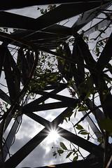 Vers la lumière (Atomic Blue Bee) Tags: structure fleur nature flower soleil sun city ville plante grimpante plant creeping atomicbluebee