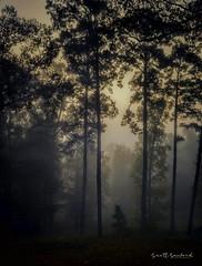 2018 Barnfull 6D (39)-Edit (Scott Sanford Photography) Tags: 6d canon ef50mmf14 eos fog morning naturalbeauty naturallight nature outdoor texas topazlabs mist trees plants shadows lightandshadow naturephotography light