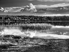 Approaching Storm Over Lawrence Lake (by Deborah K Photography) Tags: dustyroadphotos blackandwhite storm lawrencelake water minimumcolour bw lake beach campsite deborahkphotography trees summer ruralphotography scenic monochrome landscape sunlight alberta rvlife sky canada clouds canadian olympusomdem1 afternoon