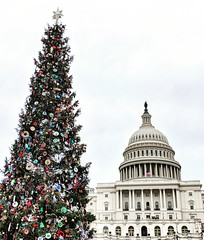 Capitol Christmas tree (ekelly80) Tags: dc washingtondc december2018 winter capitol capitolhill capitolchristmastree tree dome ornaments