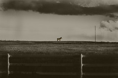 big brew over middle road (Fat Burns ☮) Tags: bw blackandwhite sepia landscape horse storm clouds middleroad peakcrossing queensland australia nikond750 sigma150600mmf563dgoshsmsports outdoors