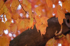 Indiana State in the Fall (gabriella_tschudy) Tags: college indiana state university fall leaves change