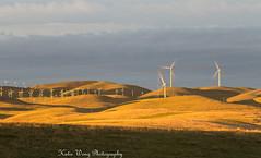 Windmill Farm Livermore, California (katiewong511) Tags: windmills livermore california energ power alternative sunrise windturbines eastbay bayarea landscape rollinghills farm