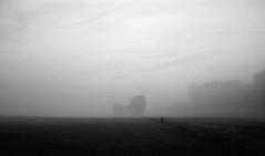 November sadness (Rosenthal Photography) Tags: nebel landschaft twiste 20181101 bohnste schwarzweiss anderlingen irfoto 35mm wense epsonv800 ff135 städte olympustrip35 ilfordlc2912920°c11min ilfordsfx asa200 infrarot analog baum dörfer siedlungen sadness november autumn mood blackandwhite landscape mist fog mistymirror olympus olympus35 trip35 dzuiko zuiko 40mm f28 ilford sfx sfx200 lc29 129 epson v800