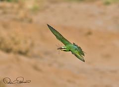 102790840 (TARIQ HAMEED SULEMANI) Tags: sulemani tariq tourism trekking tariqhameedsulemani winter wildlife wild birds nature nikon