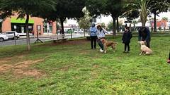 IMG_8490 (Doggy Puppins) Tags: educación canina adiestramiento canino perro dog