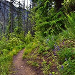 It Was Time to Hike and Explore the Forest and Mountains of North Cascades National Park... thumbnail