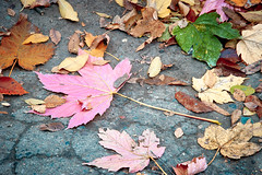 leaves fallen, not yet decayed (uiriidolgalev) Tags: leavesfallen notyetdecayed