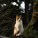 A cat #3 (@umc2012) Tags: cat animal snap sony japan glens