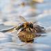 The last bee standing