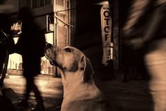Dog in street (iboofe) Tags: fuji fujifilm fujix turkey istanbul fujinon27mm