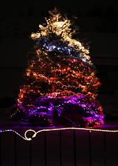 Lighted Tree (wyojones) Tags: wyoming cody christmas christmasseason holidays lights tree yard street merrychristmas decorations fence snow wyojones np