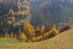 At the beginning (Baubec Izzet) Tags: baubecizzet pentax landscape autumn trees nature