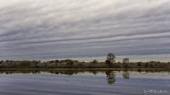 Slick as Glass (Scott Sanford Photography) Tags: 6d canon ef50mmf14 eos lake naturalbeauty naturallight nature outdoor reflection texas topazlabs water trees texasstateparks martindiesjrstatepark