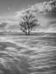 DSCF6807-Edit.jpg (mblonde12) Tags: britannia winter