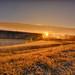 Frosty Sunburst