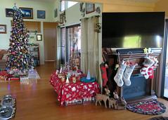 Christmas morning (BarryFackler) Tags: christmas holiday yuletide christmastime fireplace christmasstockings reindeer rug goodies candycanes wonderwomandoll aquamandoll meradoll familyroom livingroom christmastree christmasdecorations christmasornaments christmastable christmaslights tablecloth ornaments lights decorations tv television 2018 christmas2018 indoor hawaii barryfackler westhawaii polynesia bigisland kona hawaiicounty sandwichislands island hawaiianislands captaincookhi cookslanding captaincookhawaii home