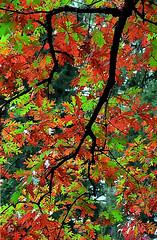 """Cincinnati - Spring Grove Cemetery & Arboretum """"Autumn Inside"""" (David Paul Ohmer) Tags: cincinnati ohio spring grove cemetery and arboretum autumn fall"""