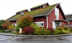 Greenbank Farm circa. 1904 (Barn B) Gary Ando Barn (SonjaPetersonPh♡tography) Tags: whidbeyisland washington washingtonstate stateofwashington barns redbarn nikon nikond5300 greenbankfarm circa1904 historicsite historic heritage heritagebuilding heritageregisteredproperty whidbeypiescafe grocerystore store barn greenbank shops fields forests wetlands winetastingshop restaurant greenbankcheese artworksgallery robschoutengallery events birdwatching property hiking