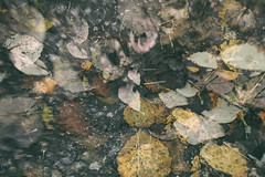 composition - 22 (Rino Alessandrini) Tags: foglie inverno pioggia colori astratto leaves winter rain colors abstract nature backgrounds pattern water leaf wet autumn river closeup outdoors pond lake reflection textured forest brown season plant drop everypixel