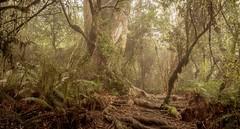 Otepatotu reserve near Akaroa, New Zealand (ndoake) Tags: