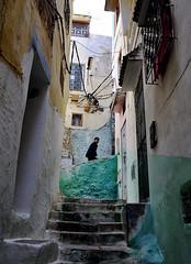 Going up (MikyAgo) Tags: mikyago micheleagostini nikon d90 2018 marocco maroc morocco africa trip travel viaggio ontheroad moulayidrisszerhoun moulayidriss moulay idriss