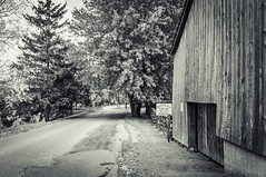 Tilt Farm (Dad from Hell) Tags: blackwhite canada canadarocks chickens flowersplants garypaakkonen iamcanadian kitchener photography tiltfarm tiltroad bw barn blackandwhite d300s eggs fall landscape monochrome nikon ontario road sign signage trees ca scavengerhunt24 scavengers
