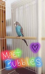 Got a budgie for Christmas!!! 😀His name is Bubbles! (BMADHudson) Tags: budgie bird parrot parakeet florida phone phonephotography bubbles blue cage