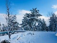(ARTistDx) Tags: sky nature mountain trees pool white winter snow 2019 mygarden garden