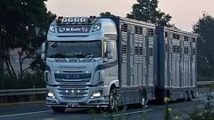 D - M. Korte DAF XF 106 SSC (BonsaiTruck) Tags: korte daf viehtransporte livestock lkw lastwagen lastzug truck trucks lorry lorries camion caminhoes