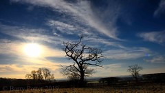 Interesting Tree (Barry Potter (EdenMedia)) Tags: barrypotter edenmedia nikon d7200