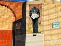 Club for senior emus (BrianRope) Tags: