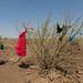 Somali woman drying clothes in an arid area, Afar Region, Gewane, Ethiopia