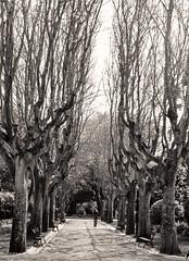 La mujer en el parque (carlos_ar2000) Tags: parque park galeria gallery arbol tree chica girl mujer woman bella beauty sexy calle street paseo walk linda pretty gorgeous oeiras portugal