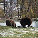"""LiBearty Bear Reservation in Zarnesti, Transylvania (23) • <a style=""""font-size:0.8em;"""" href=""""http://www.flickr.com/photos/131242750@N08/32303334718/"""" target=""""_blank"""">View on Flickr</a>"""