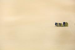 Cleared Farmland (Aerial Photography) Tags: by la ndb 21092018 5sr53394 ackerbau baum bavaria bayern braun bäume deutschland drei einsamkeit erde farbe feld fotoklausleidorfwwwleidorfde fotoklausleidorfwwwleidorfaerialcom germany grafik groshochreit johannesbrunn landscapeandnature landschaft landschaftnatur landwirtschaft laubbaum luftaufnahme luftbild p1 region schalkham aerial agriculture brown color colour deciduoustree earth field foliagetree graphicart graphics landscape landscapenature leaftree loneliness nature outdoor soil three tree trees tres trois schalkhamlkrlandshut bayernbavaria deutschlandgermany deu