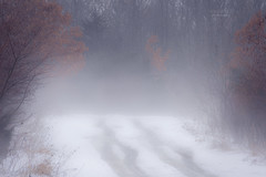 hazy path ... (mariola aga) Tags: winter forest trees road path snow mist haze melting landscape nature coth coth5