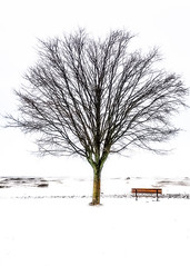 Getting Artsy #2 (KWPashuk (Thanks for >3M views)) Tags: samsung galaxy s8 s8plus lightroom luminar luminar2018 luminar3 kwpashuk kevinpashuk winter tree bench waves water park storm outdoors nature coronationpark oakville ontario canada