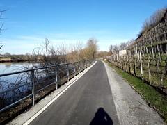 Radweg Lauffen-Heilbronn (dmytrok) Tags: radweg lauffen heilbronn fahrrad neckar neckarradweg bicycle cycling badenwürttemberg germany deutschalnd
