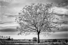 Collecting the Light... (Ody on the mount) Tags: abendlicht anlässe bäume em5ii himmel mzuiko2518 omd olympus pflanzen schwäbischealb solitär sonnenuntergang wanderung wolken bw monochrome sw sunset trees